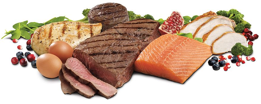 단백질 왜 꼭 먹어야 할까요?